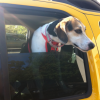 Thumbnail image for As Seen in SoMD:  Doggie Road Trip