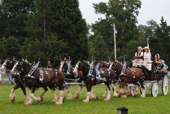Fair Horses